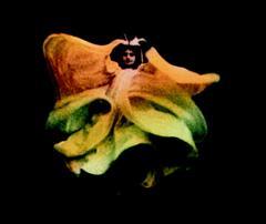 Le Farfalle (Anonymous, 1907)