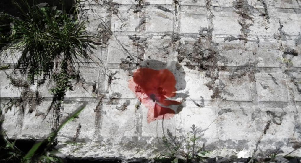 Pandemia: Flores al margen / malas hierbas (Rrose Present, 2020)
