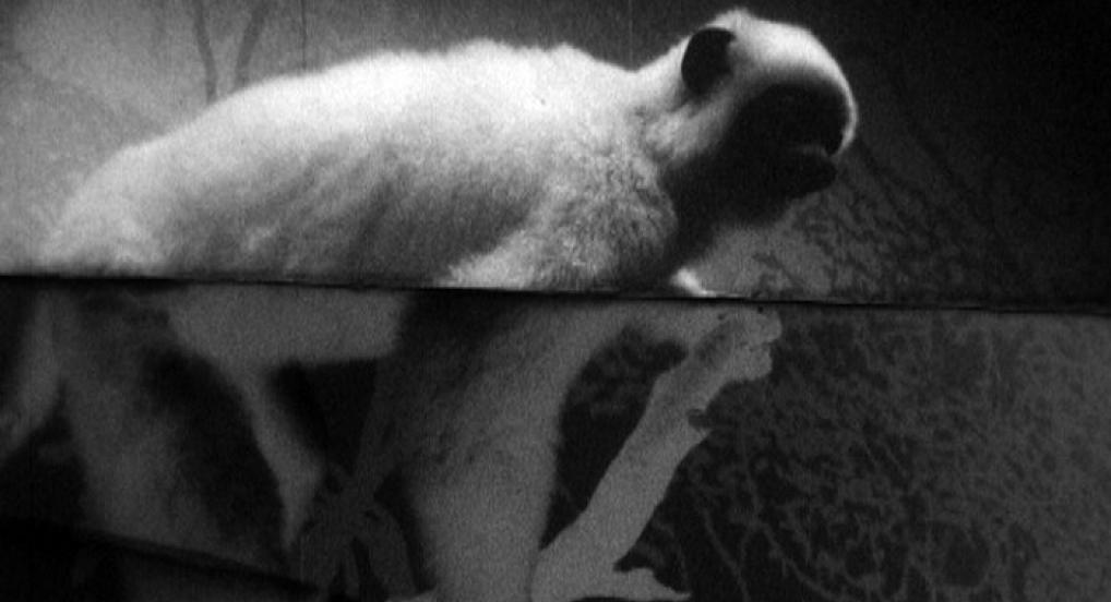 The Masked Monkeys (Anja Dornieden & Juan David González Monroy, 2015)