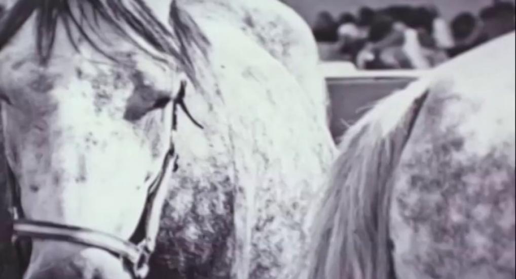Broken Horses (Peter Miller, 2007)
