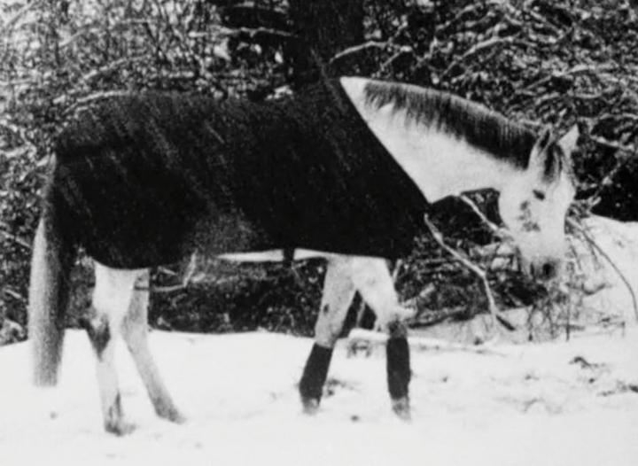 Im Schnee / In the Snow (Helga Fanderl, 2001)