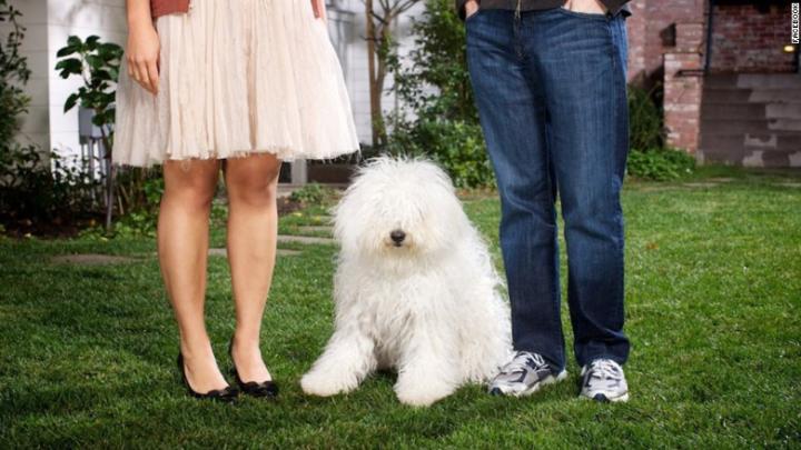 Mark Zuckerberg's Dog by Hawk Martha