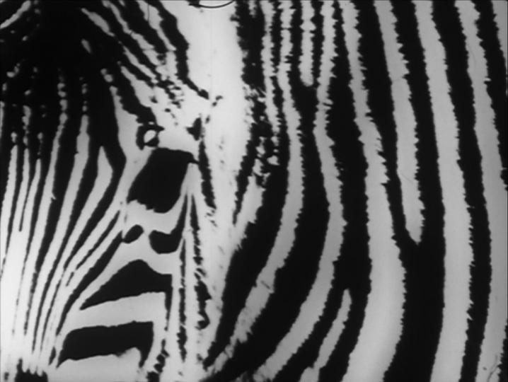 Zebra (Louis Hock, 1973)
