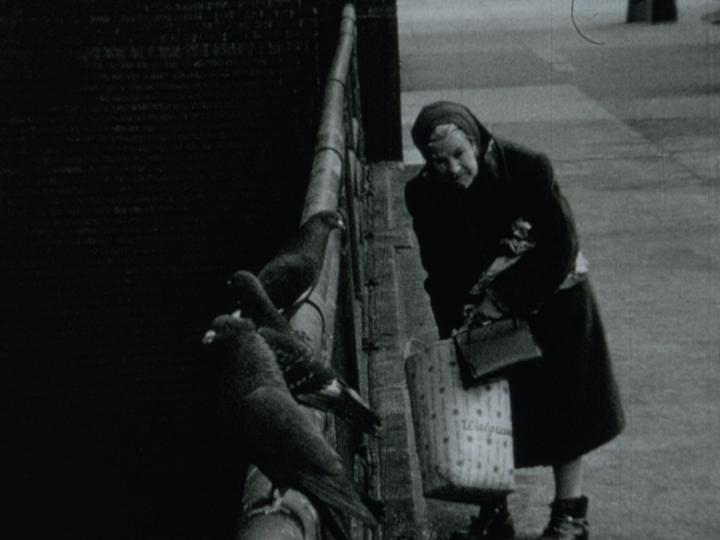 Pigeon Lady (Tom Palazzolo, 1966)