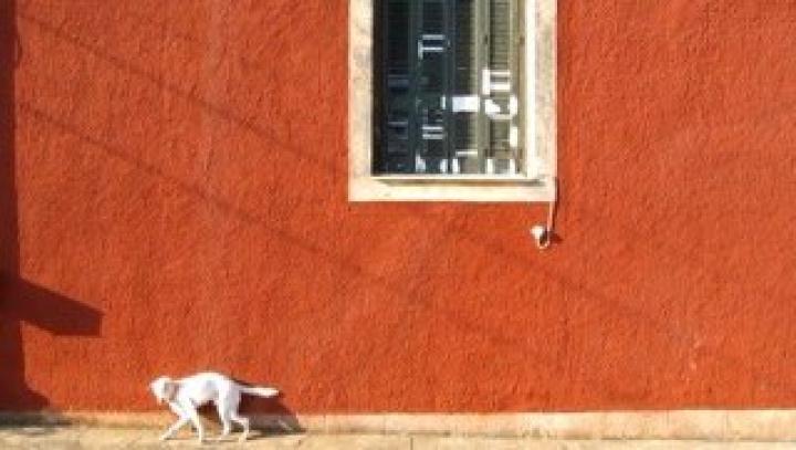 Notes And Sketches I - Dog Watch, Zika Estate, Aegina, 4.9.2015