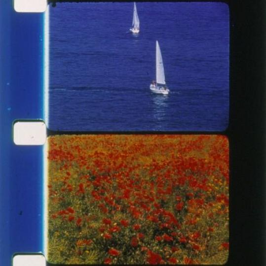 Voiliers et coquelicots (Rose Lowder, 2001)