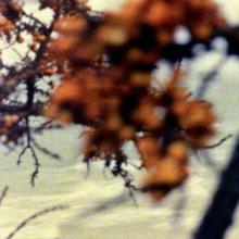 Am Meer (Ute Aurand, 1995)